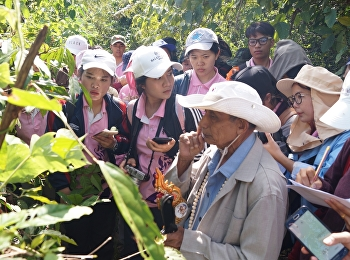 Hiking Activities, Herbs and Wisdom, Folk Medicine For 3rd year students